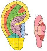 Seminari e scuole di Auricoloterapia
