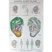 mappa auricolare Nogier - formato A4