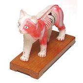 modello gatto