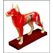 modello cane