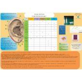 Scheda Auricoloterapia per tutti -  Terapia Antifumo