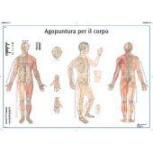tavola didattica per agopuntura corpo