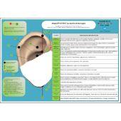 Scheda Auricoloterapia per tutti - Punti Psichici in Auricoloterapia