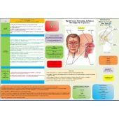 Scheda Auricoloterapia per tutti - Mal di Testa, Emicrania, Cefalea e Nevralgia del Trigemino