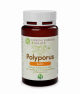 POLYPORUS BASIC- 120 compresse