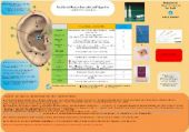 Scheda Auricoloterapia per tutti -   Perdita del peso e controll