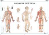 SEIRIN Body Acupuncture chart