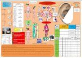 Scheda Auricoloterapia per tutti - Auricoloposturologia